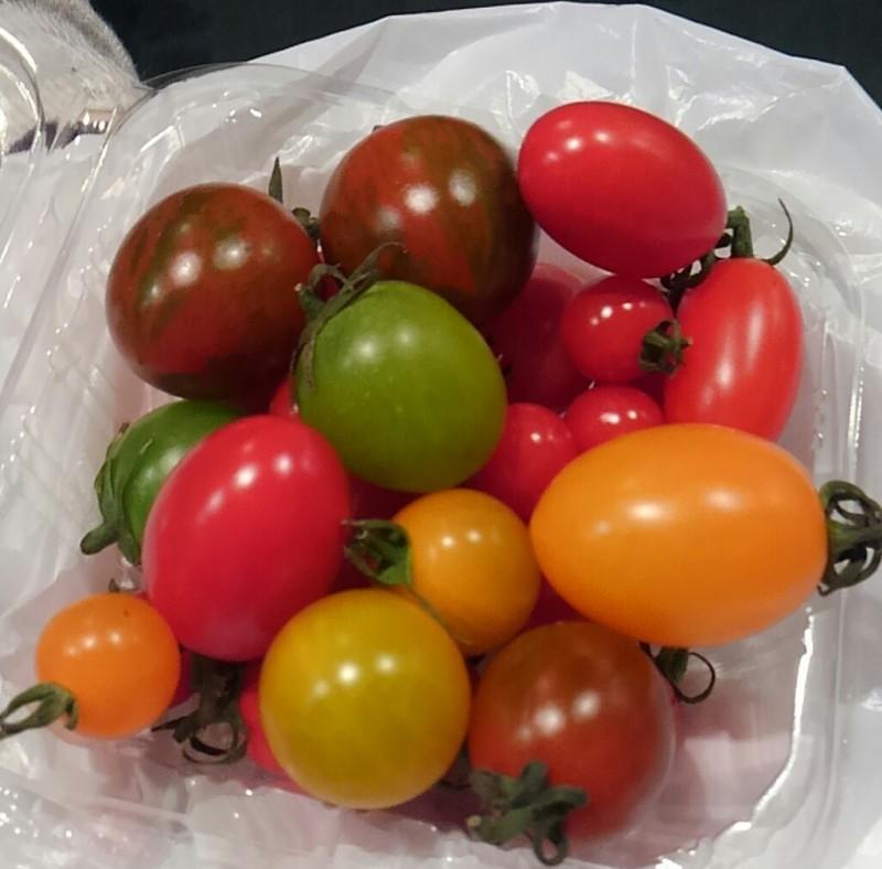 いろいろな種類のトマト