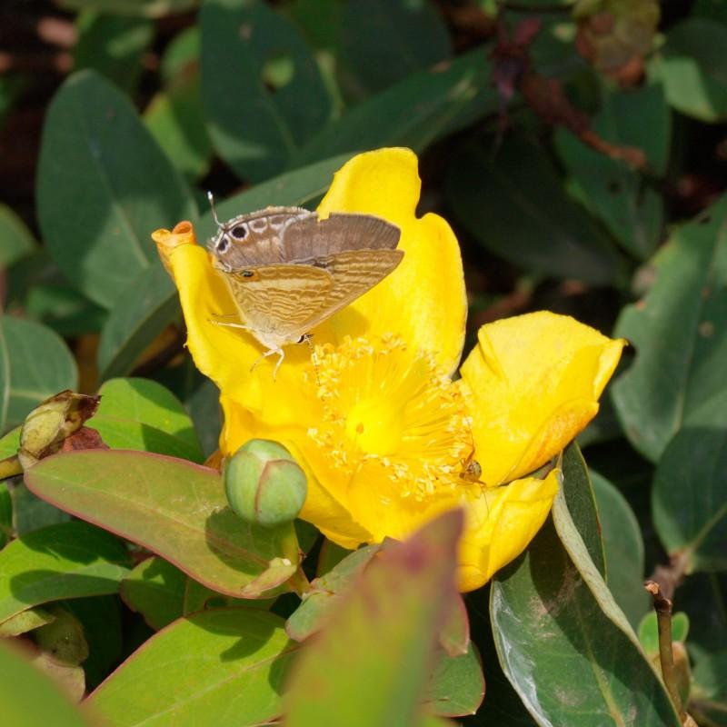 蝶と蜘蛛と黄色い花