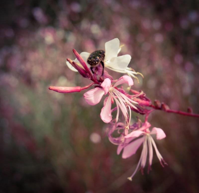 はなむぐりwithピンクのお花