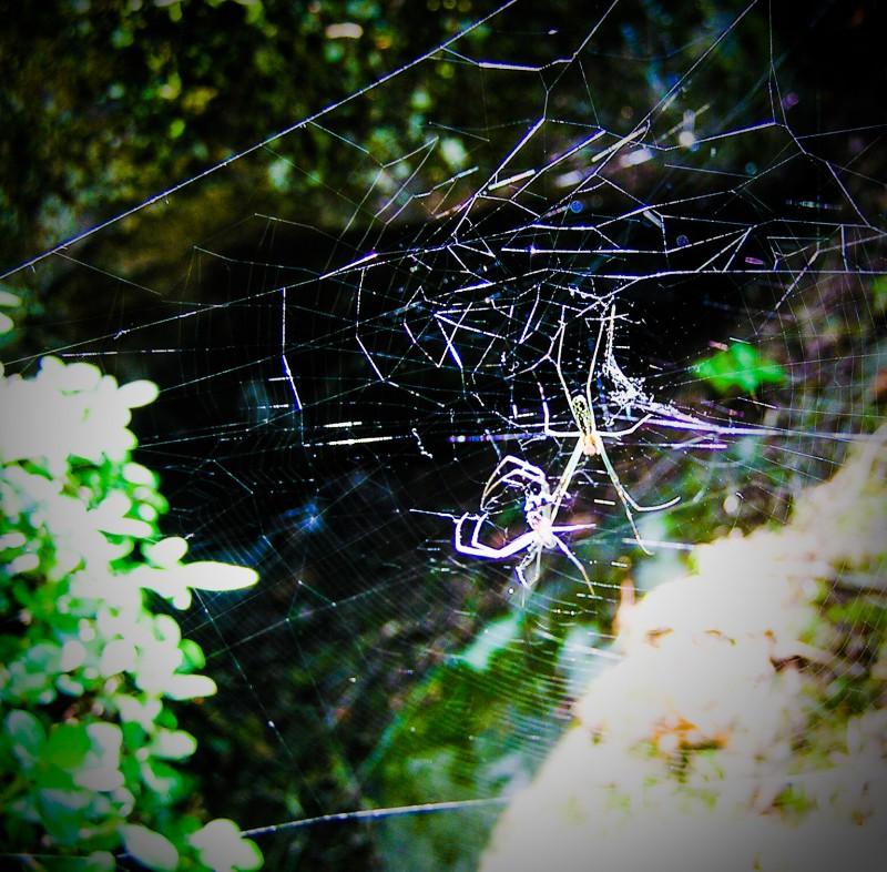 キラキラ光る蜘蛛の巣