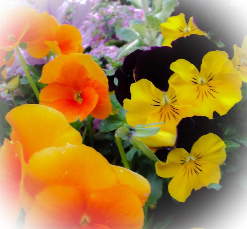 冬の花壇の賑わい