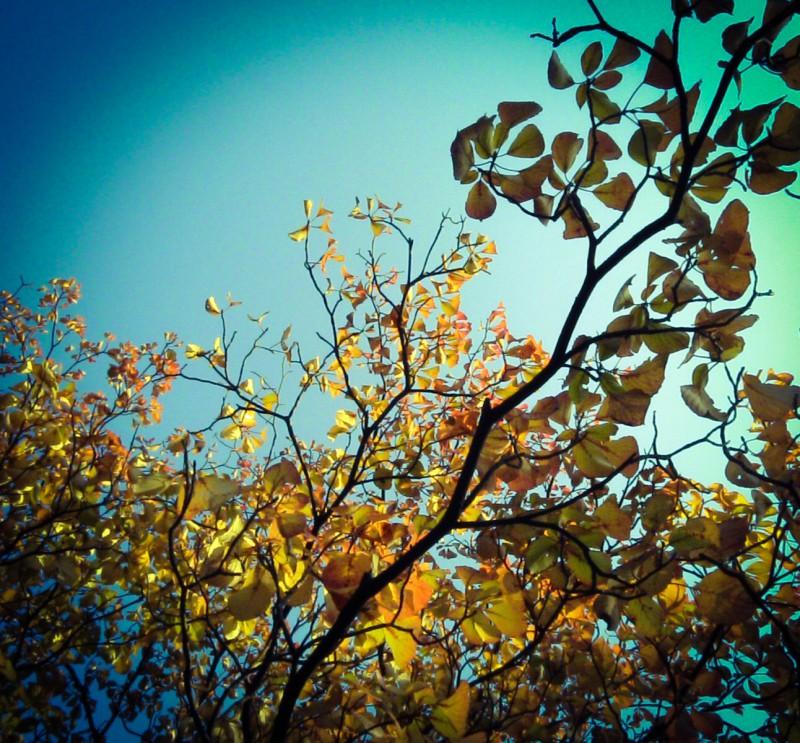 オレンジとイエローの紅葉