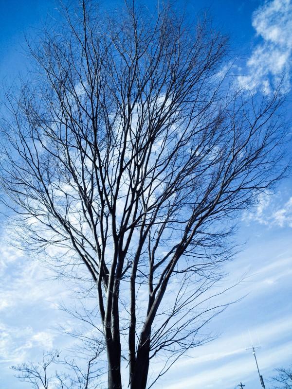 澄みきった空に樹