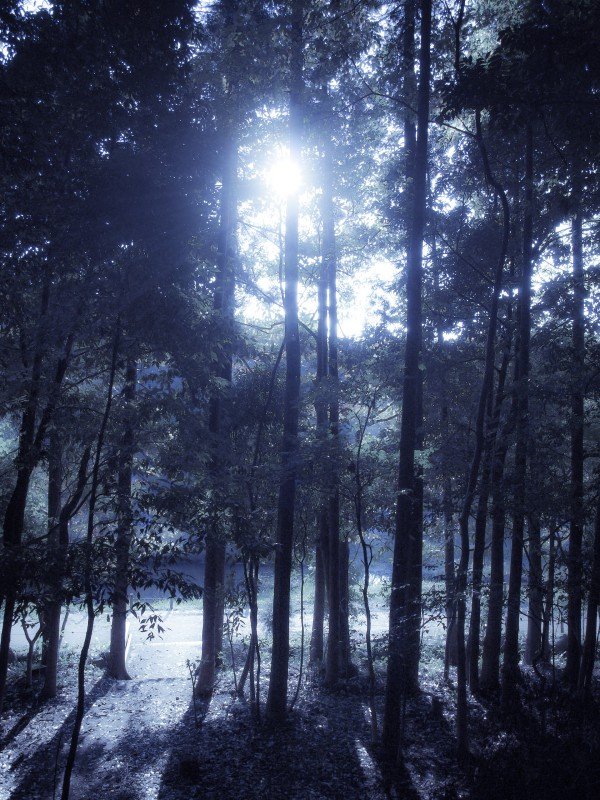 冬の木漏れ日